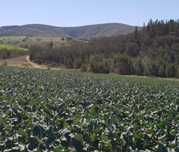 129 ha farm with good water in Ruiterbos, Mossel Bay District